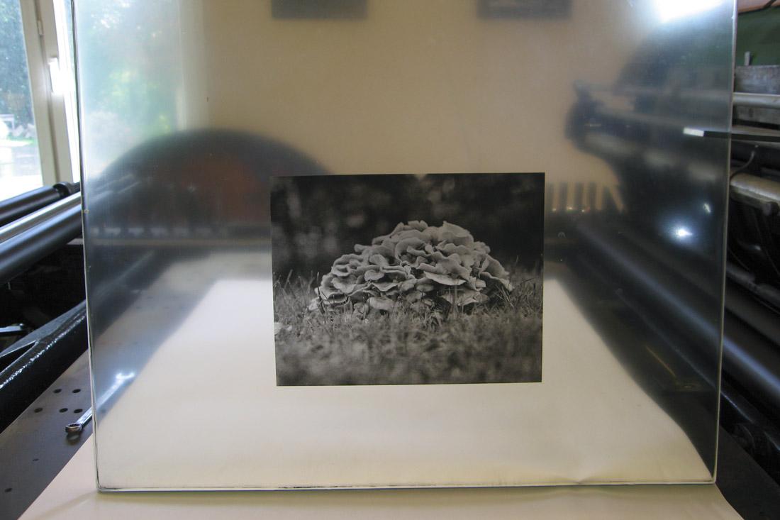 Photo Plaque après le tirage, avec l'encrage tel qu'il est pendant le tirage