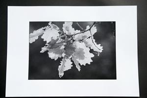 Epreuve phototypie
